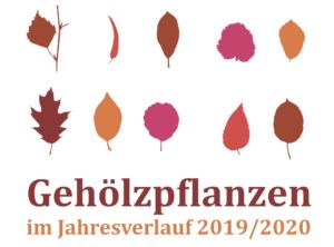 Gehölzpflanzen im Jahresverlauf 2019 / 2020